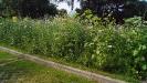 Blühwiese der Naturheilpraxis Tapken